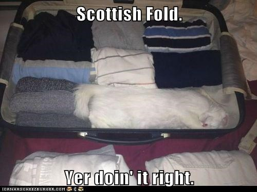 captions Cats fold if it fits scottish scottish fold suitcase - 6465261056