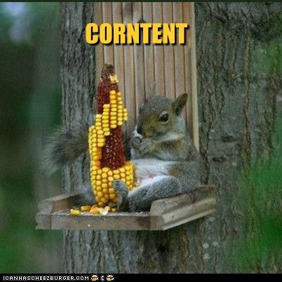captions content corn eating posted pun squirrel