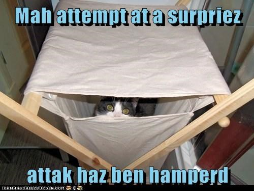 ambush captions Cats hamper laundry surprise attack - 6465552896