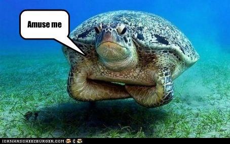 demand tortoise unimpressed - 6465739264