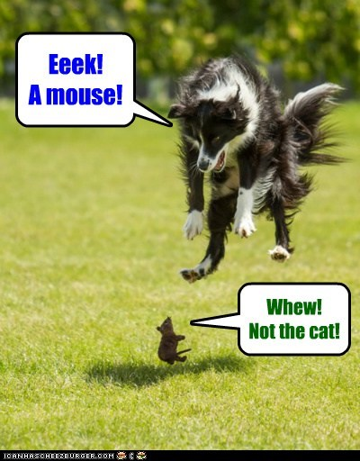 Eeek! A mouse! Whew! Not the cat!