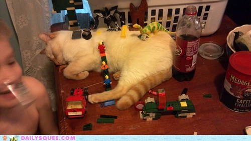 cat,legos,pet,reader squee,toys