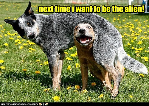 Aliens,australian cattle dogs,captions,derp,dogs,field,playing