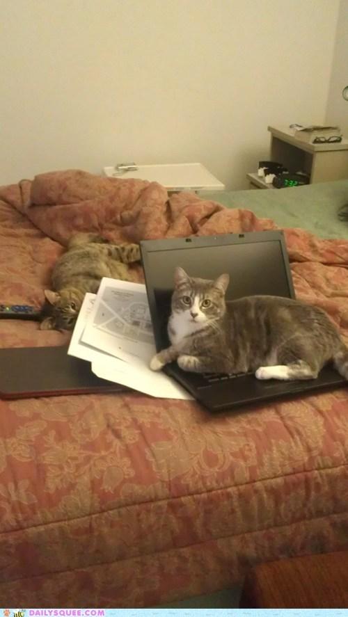 bed cat computer laptop pet reader squee work - 6466425600