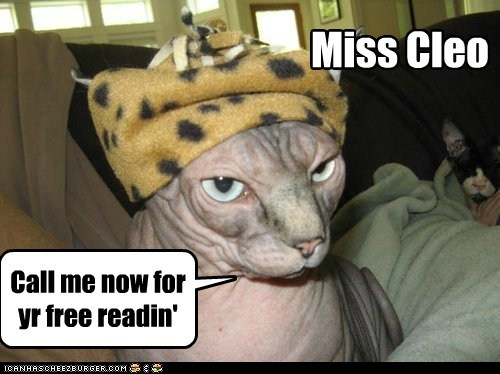 Cheezburger Image 6466456064