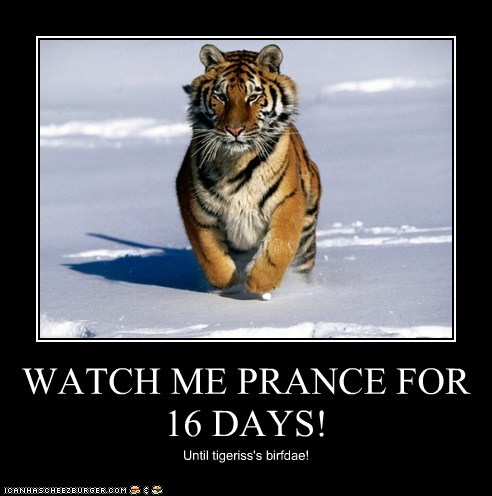 WATCH ME PRANCE FOR 16 DAYS! Until tigeriss's birfdae!