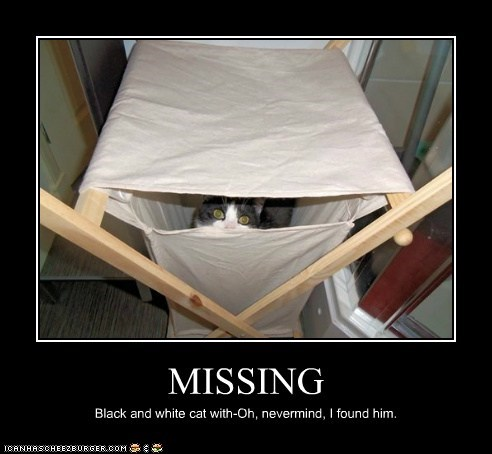 MISSING Black and white cat with-Oh, nevermind, I found him.