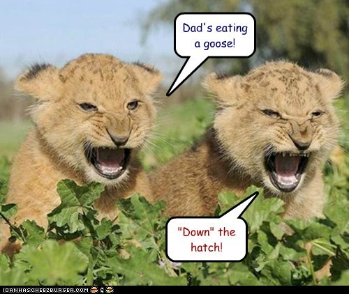 Image of: Funny Animal Bad Puns Cubs Dad Down Early Eating Goose Kids Lions 6466782208 Cheezburger Bad Puns Start Early Animal Comedy Animal Comedy Funny Animals