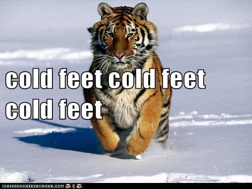 cold,cold feet,freezing,morning,running,snow,tiger
