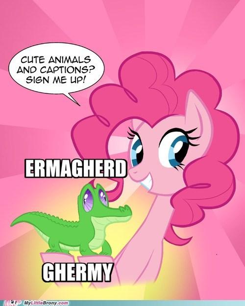 cute,Ermahgerd,gummy,meme