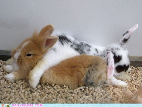 bunny crash cuddles happy bunday pile rabbit - 6467445504