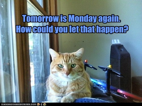 captions Cats how could you monday sunday