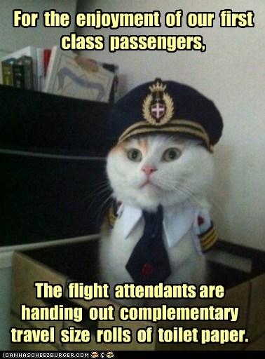 Captain Kitteh Memes - 6467955200