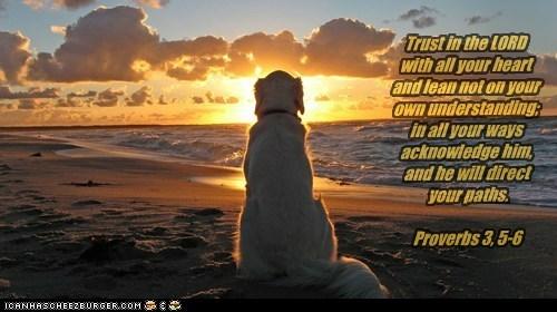 Cheezburger Image 6468332288