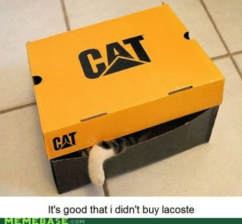 box,cat,what,what is lacoste