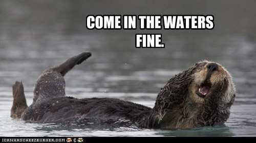 calling,come in,otter,swimming,water
