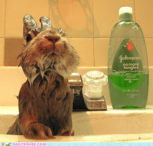 bath bunny happy bunday rabbit shampoo soaking wet