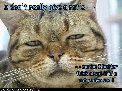 I don't really give a rat's - - - - maybe I better think about it if a rat is involved !