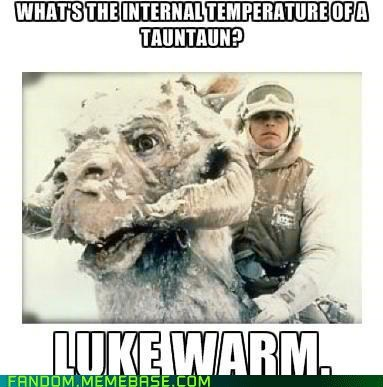 Absolutely horrible Star Wars pun about TaunTauns being 'Luke warm' inside