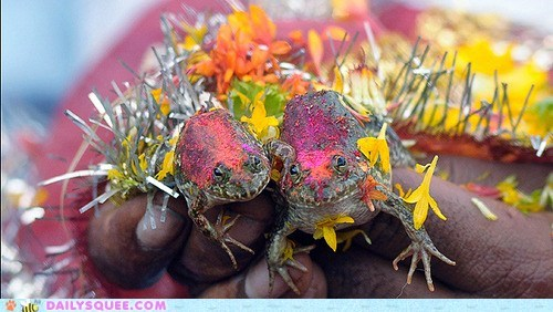 amphibians,drought,flowers,frog wedding,india,marriage,rain