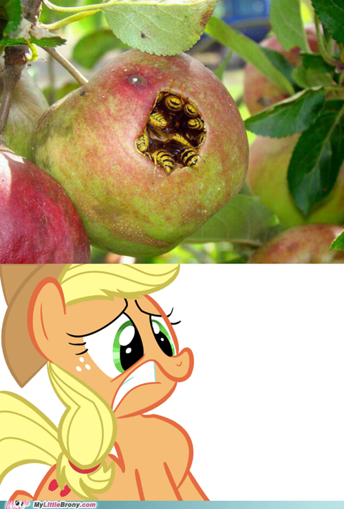 applejack bees IRL scary the internets wtf - 6469449216