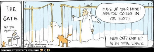 annoying,best of the week,Cats,comics,heaven,illustrations,in or out,nine lives,pearly gates