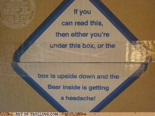 bear,box,IRL,upside down