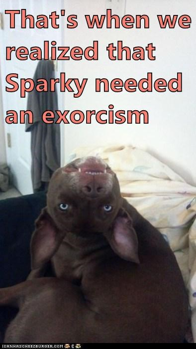 creepy derp dogs goggie the exorcist - 6469850880