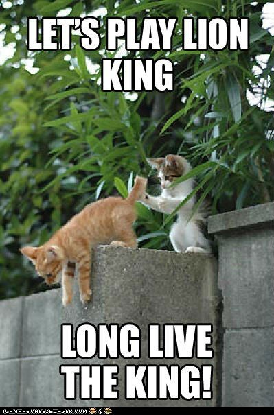 captions Cats lion king lolcats long live the king mean mufasa push scar the lion king