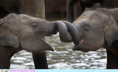 baby elephant hug noses trunk - 6469977600