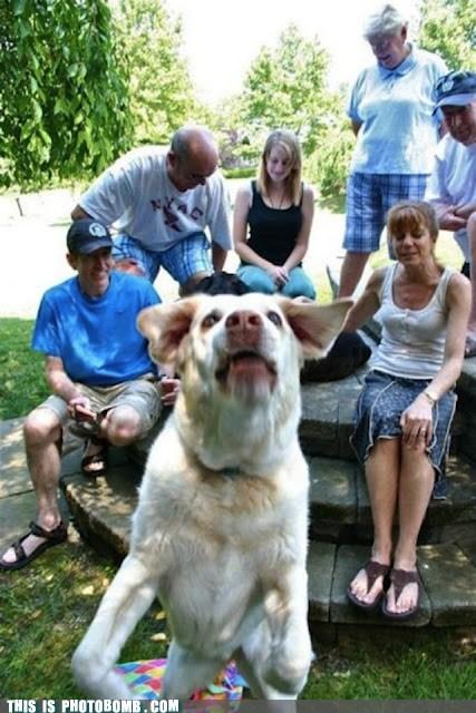 animal Animal Bomb dogs family reunion - 6470002688