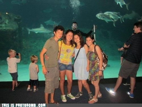 aquarium,awesome,diver,Perfect Timing