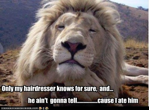 captions,hair dye,hairdresser,i ate him,lion,secret,smug