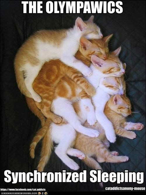 captions Cats lolcats olympics piles sleeping sports stacked synchronized synchronized swimming