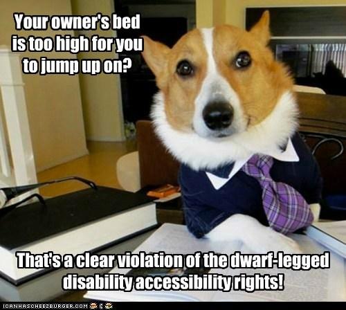 Lawyer Dog - 6470286080