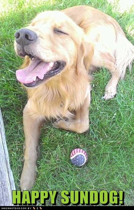dogs,grass,happy,happy sundog,Sundog,sunny weather