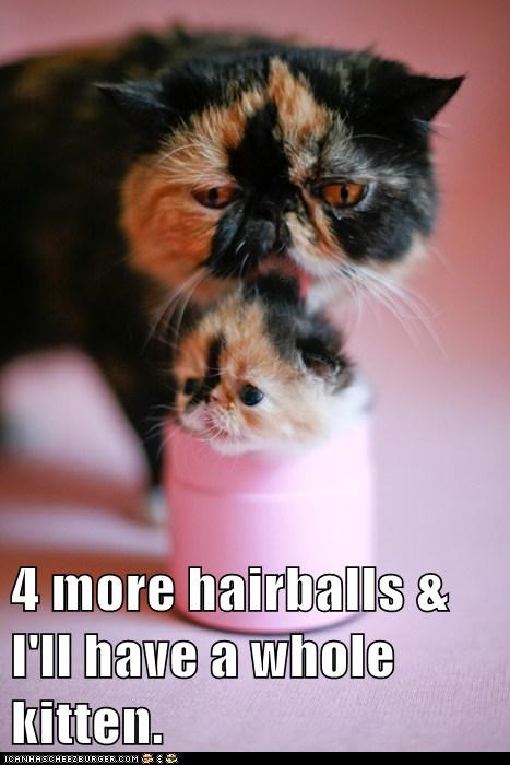 captions Cats gross hairball kitten whole - 6470822912
