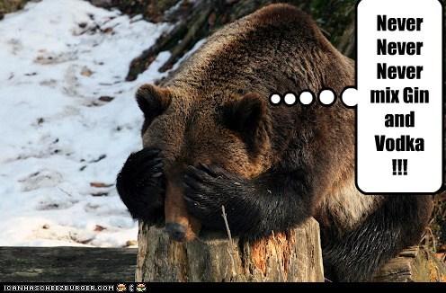 bear drinking gin hangover headache miserable never vodka - 6470840064