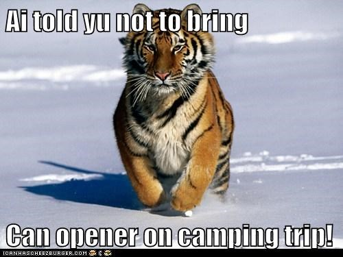 attracting,camping trip,can opener,cat,running,tiger