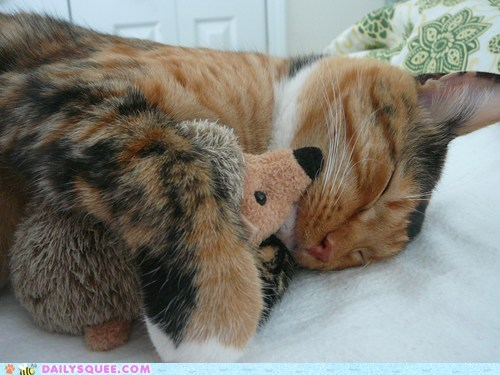 cat,cuddle buddies,pet,reader squee,snuggle,stuffed animal