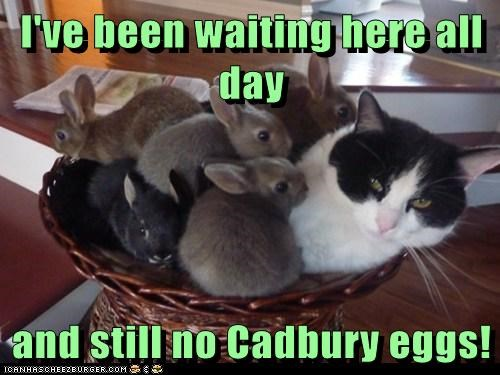 bunnies Cadbury captions Cats chocolate glass of milk easter eggs hatch rabbits