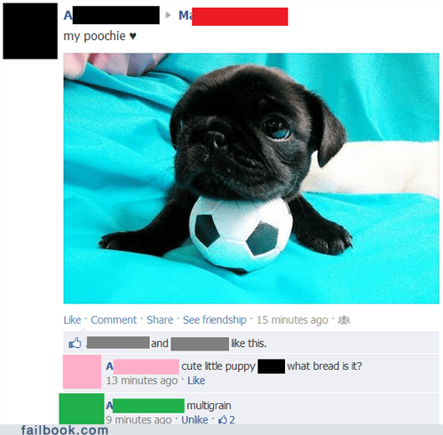bread breed dogs grammar pug puppy spelling typo - 6472243968