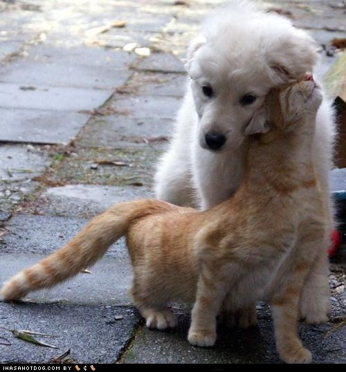 cat cuddle time dogs kittehs r owr friends what breed - 6472470016