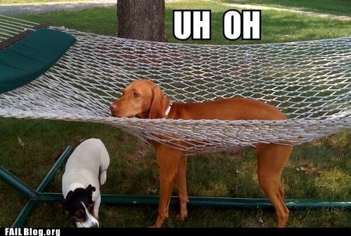 dogs fail nation g rated hammock stuck