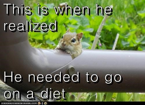 captions,diet,drain pipe,fat,realized,squirrel,stuck