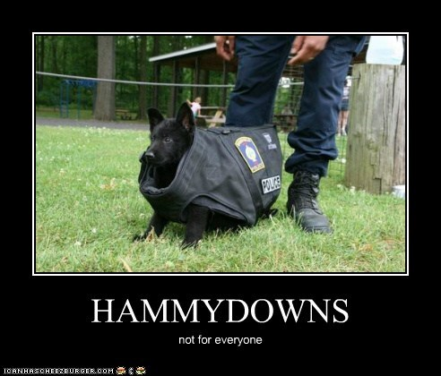 HAMMYDOWNS not for everyone