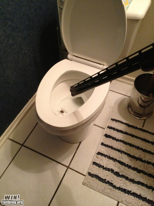 g rated Kill It With Fire pest control spider toilet win