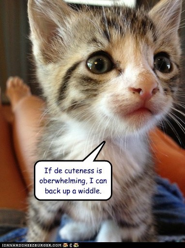 adorable captions Cats cute overwhelm too much - 6472680960