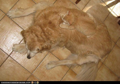 camouflage,Cats,dogs,goggies r owr friends,hiding,Interspecies Love,kitten