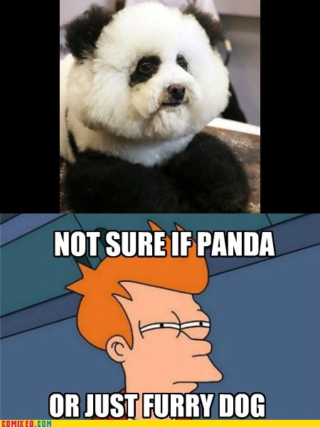 dogs,fry,Not sure if meme,panda,the internets